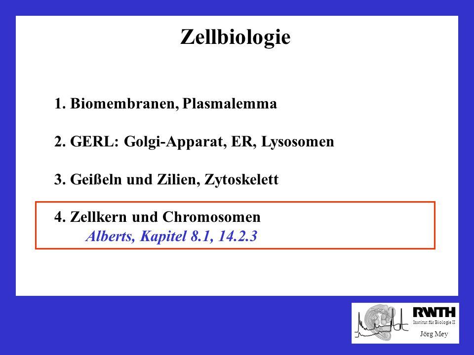 Zellbiologie 1. Biomembranen, Plasmalemma 2. GERL: Golgi-Apparat, ER, Lysosomen 3. Geißeln und Zilien, Zytoskelett 4. Zellkern und Chromosomen Alberts