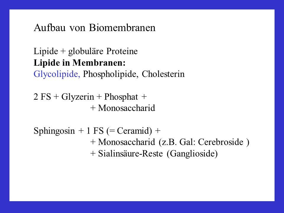 Aufbau von Biomembranen Lipide + globuläre Proteine Lipide in Membranen: Glycolipide, Phospholipide, Cholesterin 2 FS + Glyzerin + Phosphat + + Monosa