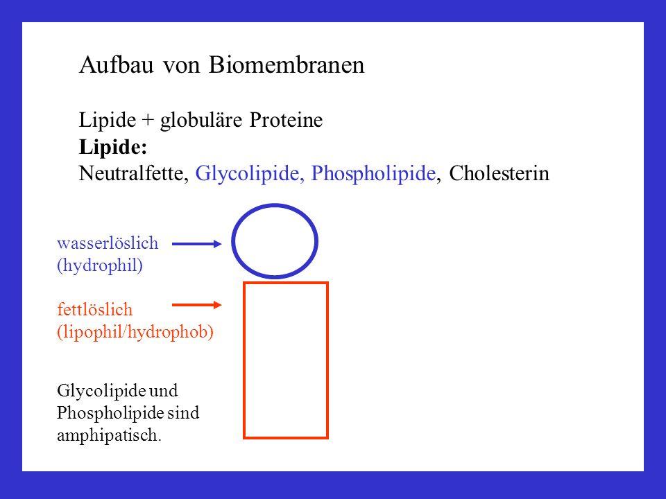 Lipide + globuläre Proteine Lipide: Neutralfette, Glycolipide, Phospholipide, Cholesterin Glycolipide und Phospholipide sind amphipatisch. wasserlösli