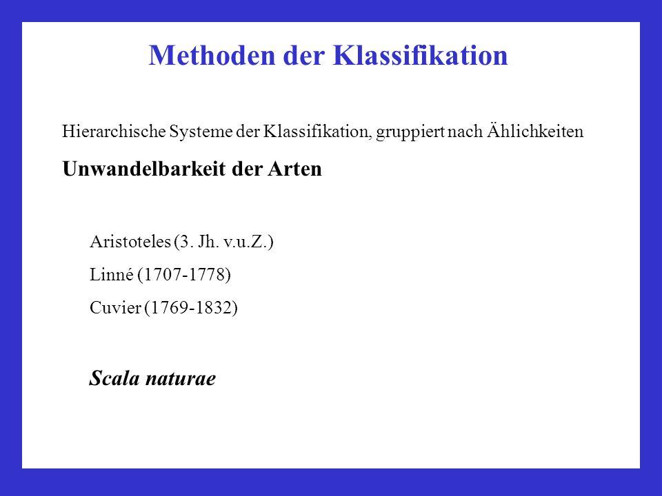 Methoden der Klassifikation Hierarchische Systeme der Klassifikation, gruppiert nach Ählichkeiten Unwandelbarkeit der Arten Aristoteles (3. Jh. v.u.Z.