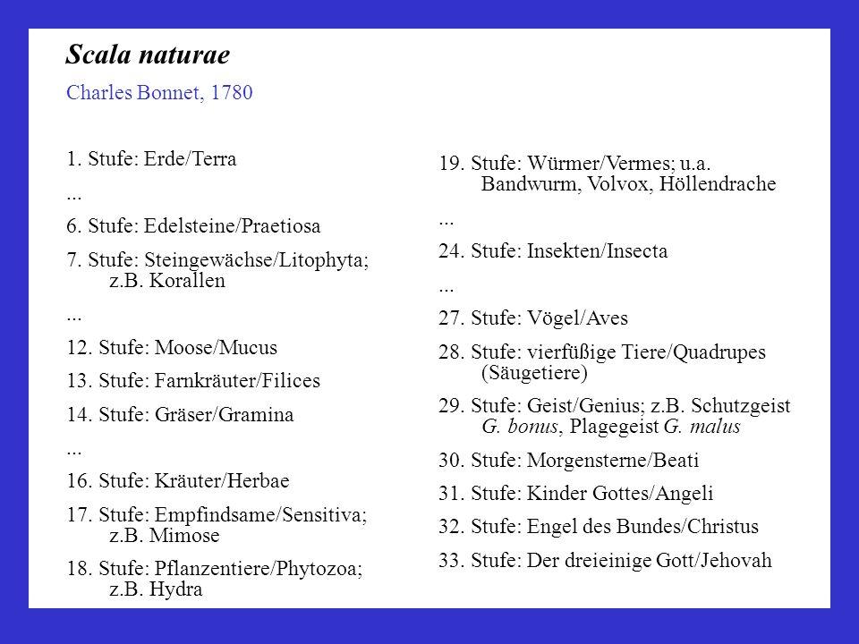 Charles Bonnet, 1780 1. Stufe: Erde/Terra... 6. Stufe: Edelsteine/Praetiosa 7. Stufe: Steingewächse/Litophyta; z.B. Korallen... 12. Stufe: Moose/Mucus