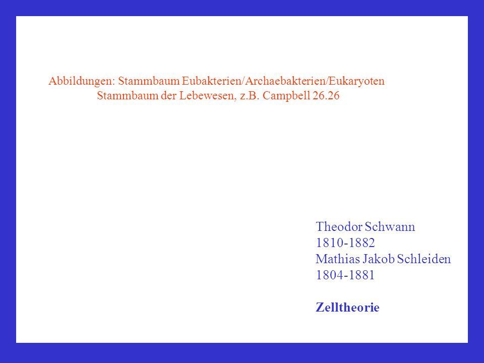 Abbildungen: Stammbaum Eubakterien/Archaebakterien/Eukaryoten Stammbaum der Lebewesen, z.B. Campbell 26.26 Theodor Schwann 1810-1882 Mathias Jakob Sch