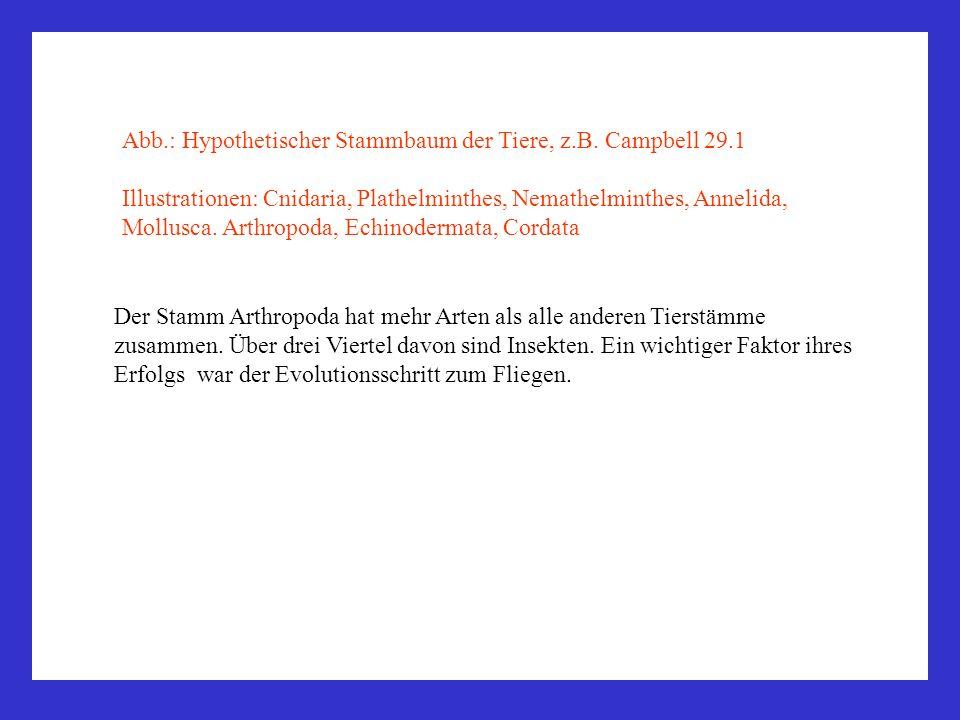 Abb.: Hypothetischer Stammbaum der Tiere, z.B. Campbell 29.1 Illustrationen: Cnidaria, Plathelminthes, Nemathelminthes, Annelida, Mollusca. Arthropoda