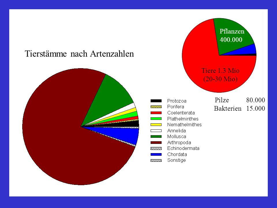 Tierstämme nach Artenzahlen Pilze 80.000 Bakterien 15.000 Tiere 1.3 Mio (20-30 Mio) Pflanzen 400.000