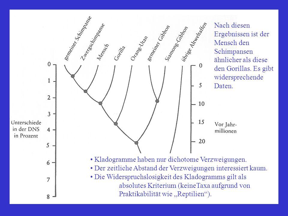 Nach diesen Ergebnissen ist der Mensch den Schimpansen ähnlicher als diese den Gorillas. Es gibt widersprechende Daten. Kladogramme haben nur dichotom