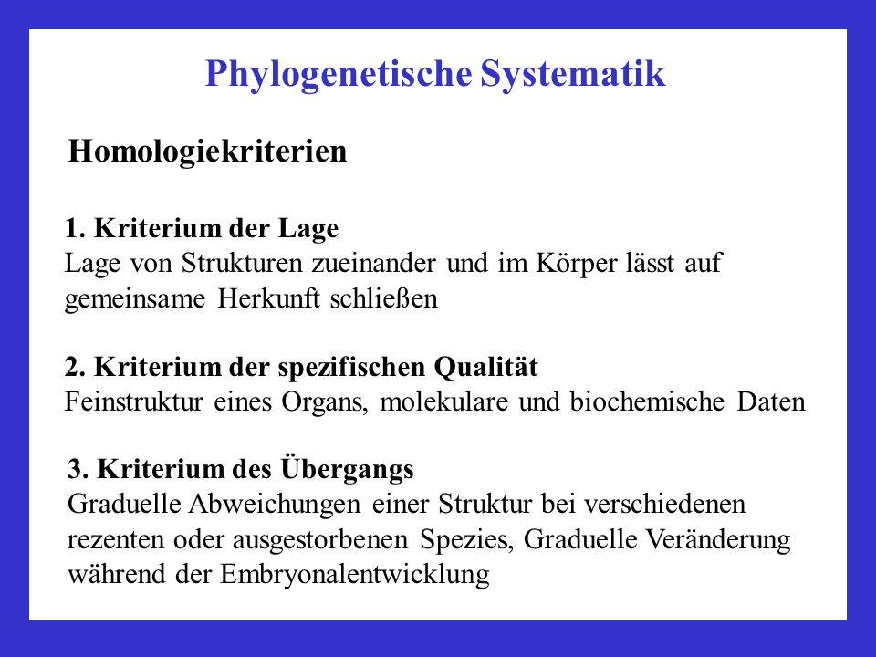 Phylogenetische Systematik Homologiekriterien 2. Kriterium der spezifischen Qualität Feinstruktur eines Organs, molekulare und biochemische Daten 3. K