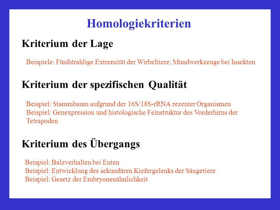 Kriterium der Lage Beispiele: Fünfstrahlige Extremität der Wirbeltiere; Mundwerkzeuge bei Insekten Homologiekriterien Kriterium der spezifischen Quali