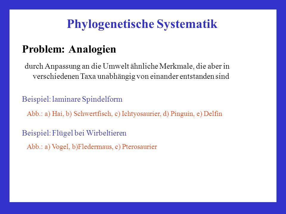 Phylogenetische Systematik Problem: Analogien durch Anpassung an die Umwelt ähnliche Merkmale, die aber in verschiedenen Taxa unabhängig von einander