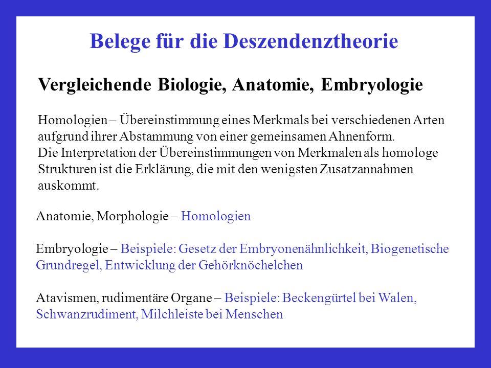 Belege für die Deszendenztheorie Vergleichende Biologie, Anatomie, Embryologie Homologien – Übereinstimmung eines Merkmals bei verschiedenen Arten auf