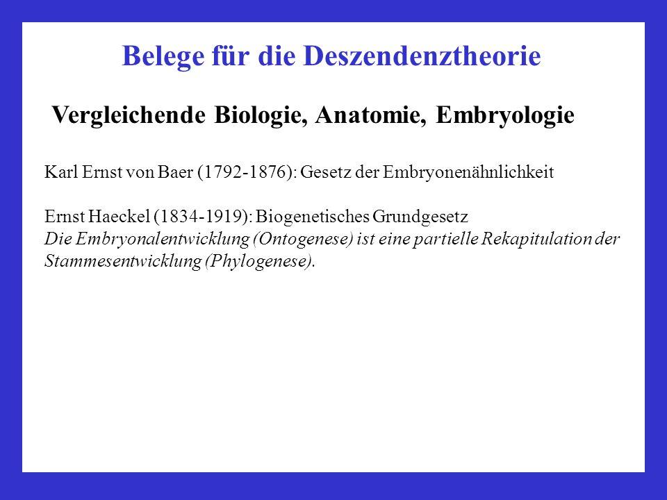 Belege für die Deszendenztheorie Vergleichende Biologie, Anatomie, Embryologie Karl Ernst von Baer (1792-1876): Gesetz der Embryonenähnlichkeit Ernst