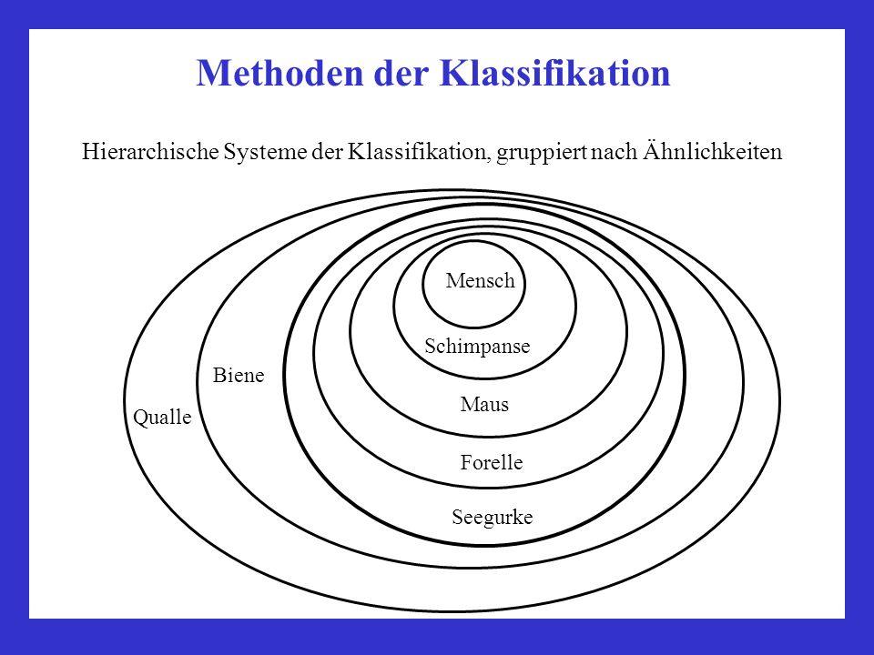 Methoden der Klassifikation Hierarchische Systeme der Klassifikation, gruppiert nach Ähnlichkeiten Mensch Schimpanse Maus Forelle Biene Seegurke Quall
