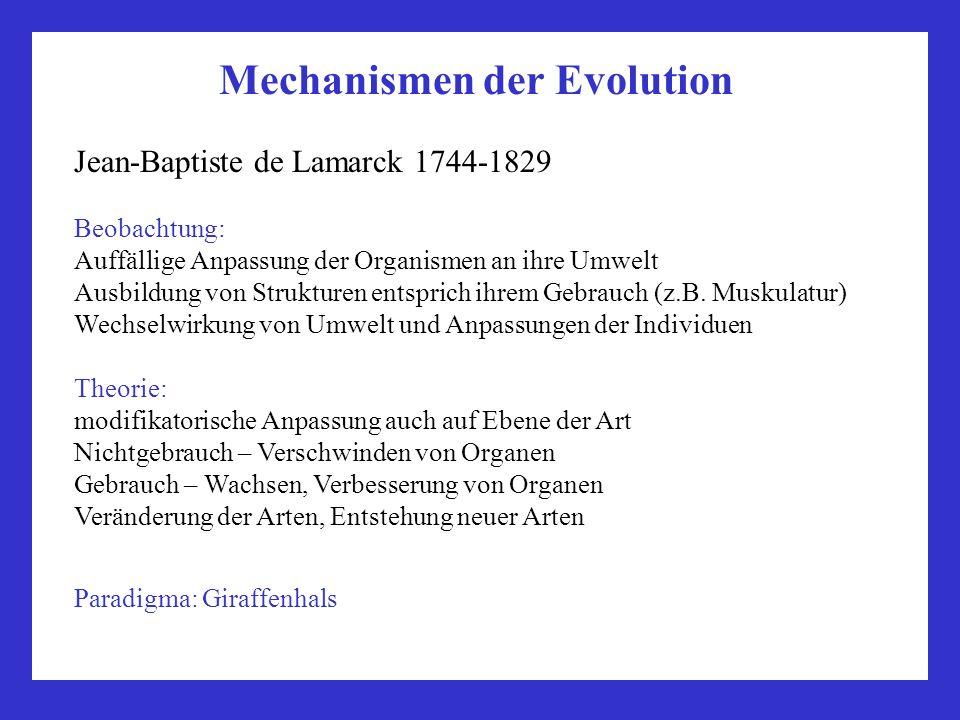 Mechanismen der Evolution Jean-Baptiste de Lamarck 1744-1829 Beobachtung: Auffällige Anpassung der Organismen an ihre Umwelt Ausbildung von Strukturen