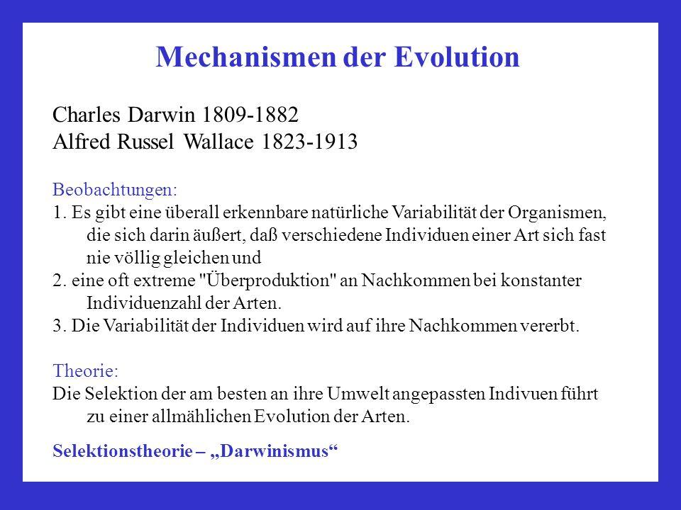 Mechanismen der Evolution Charles Darwin 1809-1882 Alfred Russel Wallace 1823-1913 Beobachtungen: 1. Es gibt eine überall erkennbare natürliche Variab