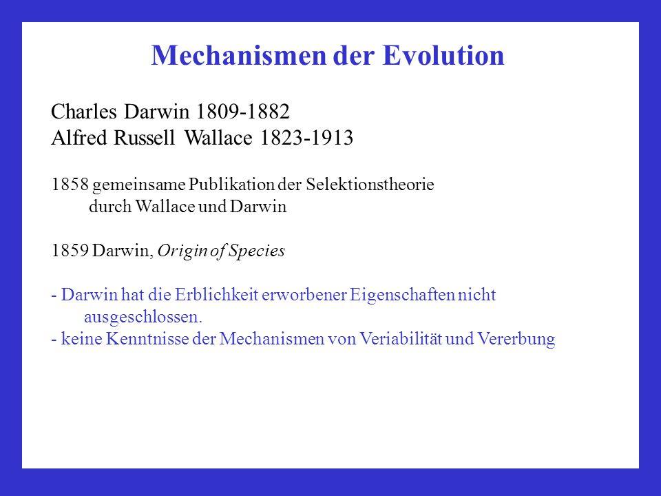 Mechanismen der Evolution Charles Darwin 1809-1882 Alfred Russell Wallace 1823-1913 1858 gemeinsame Publikation der Selektionstheorie durch Wallace un