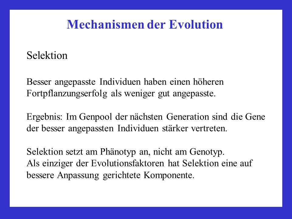 Mechanismen der Evolution Selektion Besser angepasste Individuen haben einen höheren Fortpflanzungserfolg als weniger gut angepasste. Ergebnis: Im Gen