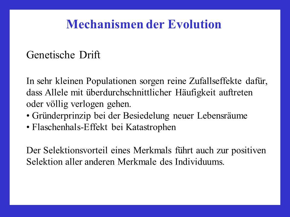 Mechanismen der Evolution Genetische Drift In sehr kleinen Populationen sorgen reine Zufallseffekte dafür, dass Allele mit überdurchschnittlicher Häuf