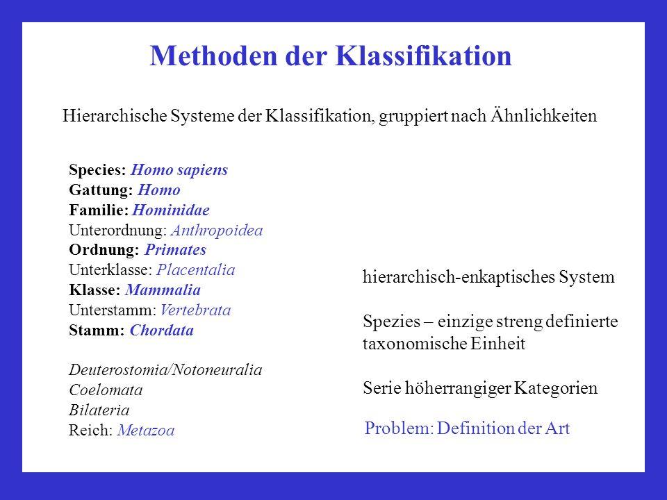Methoden der Klassifikation Species: Homo sapiens Gattung: Homo Familie: Hominidae Unterordnung: Anthropoidea Ordnung: Primates Unterklasse: Placental