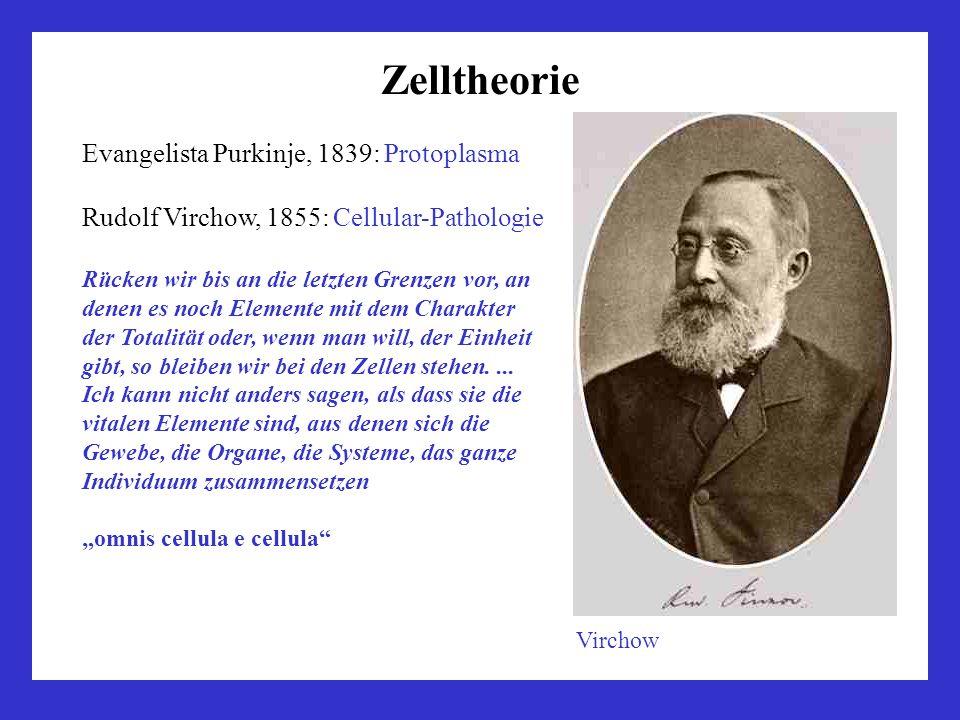 Zelltheorie Evangelista Purkinje, 1839: Protoplasma Rudolf Virchow, 1855: Cellular-Pathologie Rücken wir bis an die letzten Grenzen vor, an denen es n