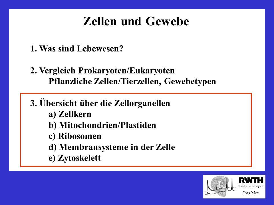 Zellen und Gewebe 1. Was sind Lebewesen? 2. Vergleich Prokaryoten/Eukaryoten Pflanzliche Zellen/Tierzellen, Gewebetypen 3. Übersicht über die Zellorga