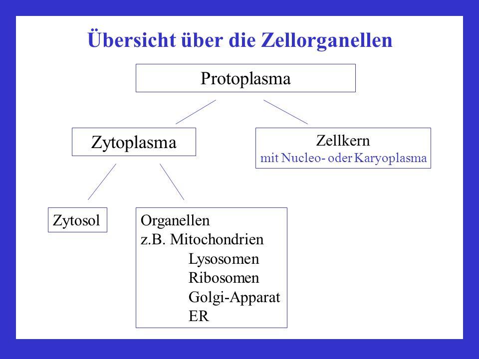 Übersicht über die Zellorganellen von Membranen umgebene Organellen Nicht durch Membranen begrenzte Organellen ZellkernRibosomen Mitochondrien, Plastiden Mikrotubuli (und die aus ihnen aufgebauten Strukturen: Centriole, Basalkörper, Geißeln und Cilien, Cytoskelett) Membransysteme Endoplasmatisches Reticulum Golgi-ApparatProteinfilamente (Cytoskelett) Lysosomen PeroxisomenProteasomen u.ä.