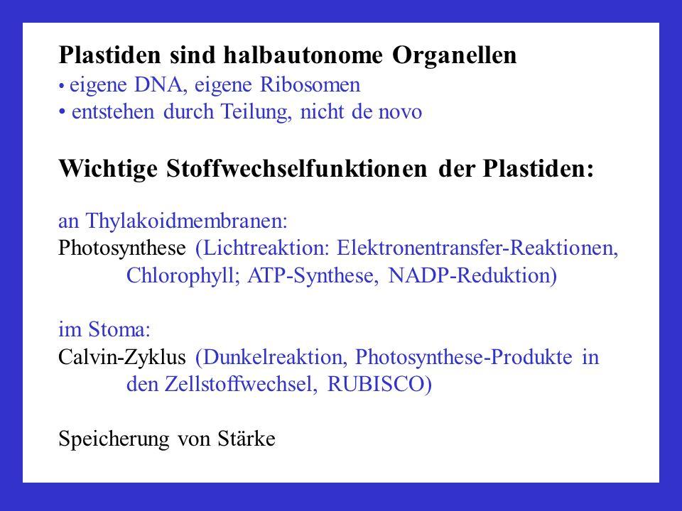 Plastiden sind halbautonome Organellen eigene DNA, eigene Ribosomen entstehen durch Teilung, nicht de novo Wichtige Stoffwechselfunktionen der Plastid