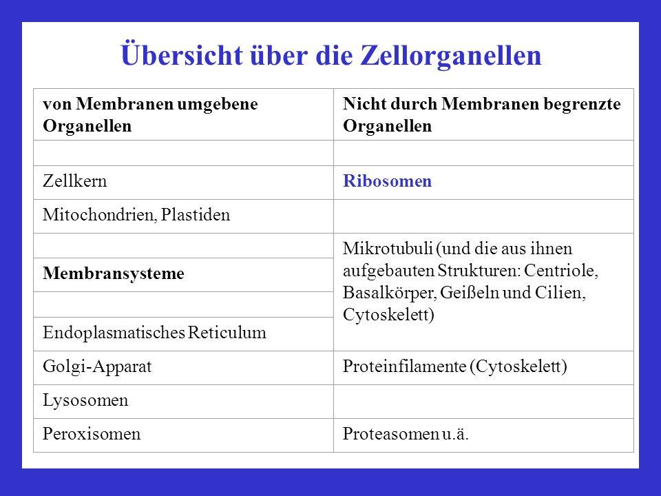 Ribosomen