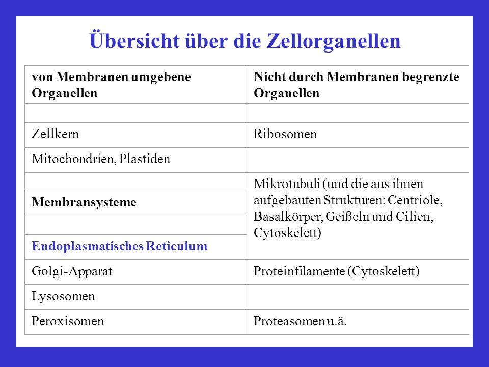 Übersicht über die Zellorganellen von Membranen umgebene Organellen Nicht durch Membranen begrenzte Organellen ZellkernRibosomen Mitochondrien, Plasti