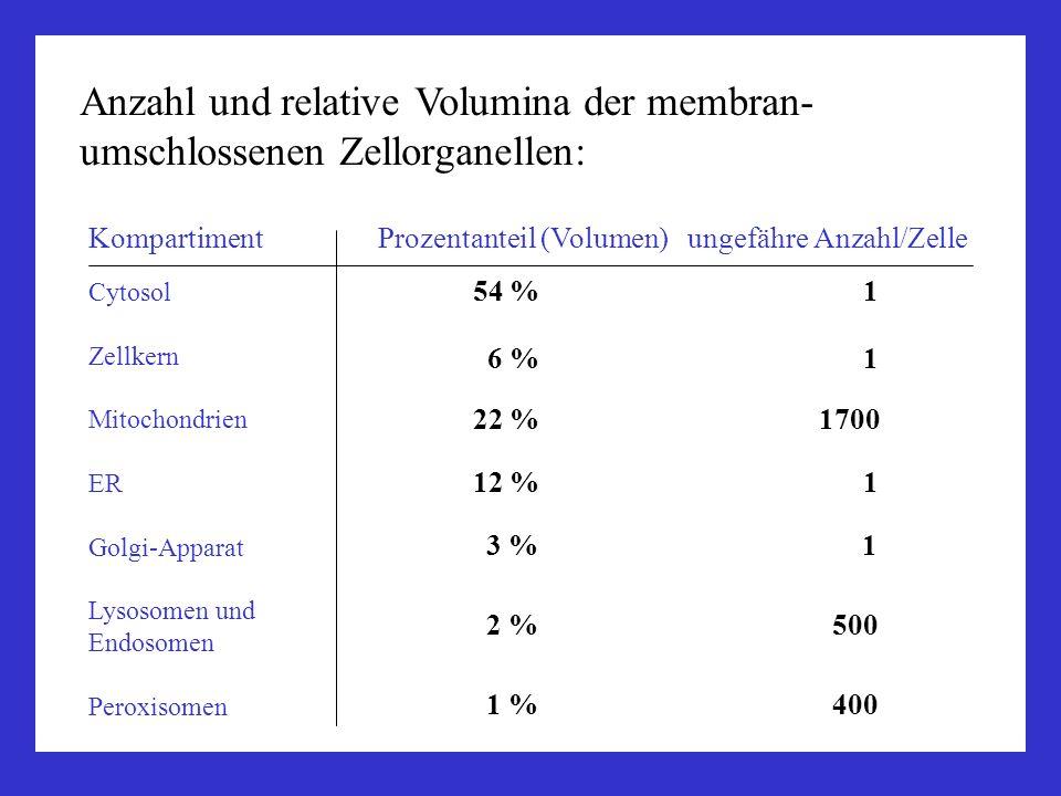 Anzahl und relative Volumina der membran- umschlossenen Zellorganellen: Kompartiment Prozentanteil (Volumen) ungefähre Anzahl/Zelle Cytosol Zellkern M