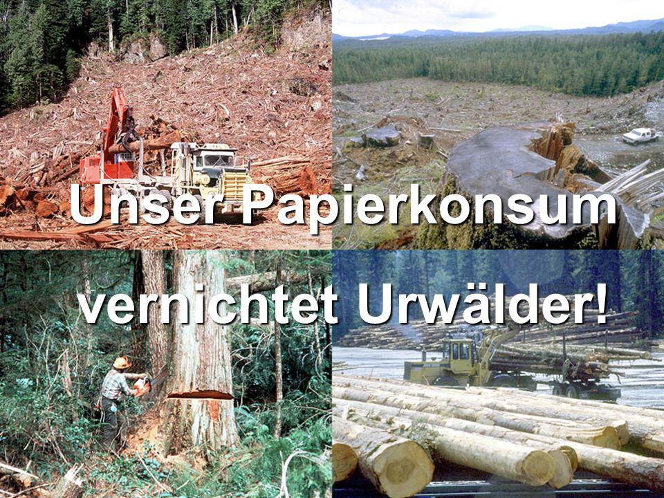12 Unser Papierkonsum vernichtet Urwälder!