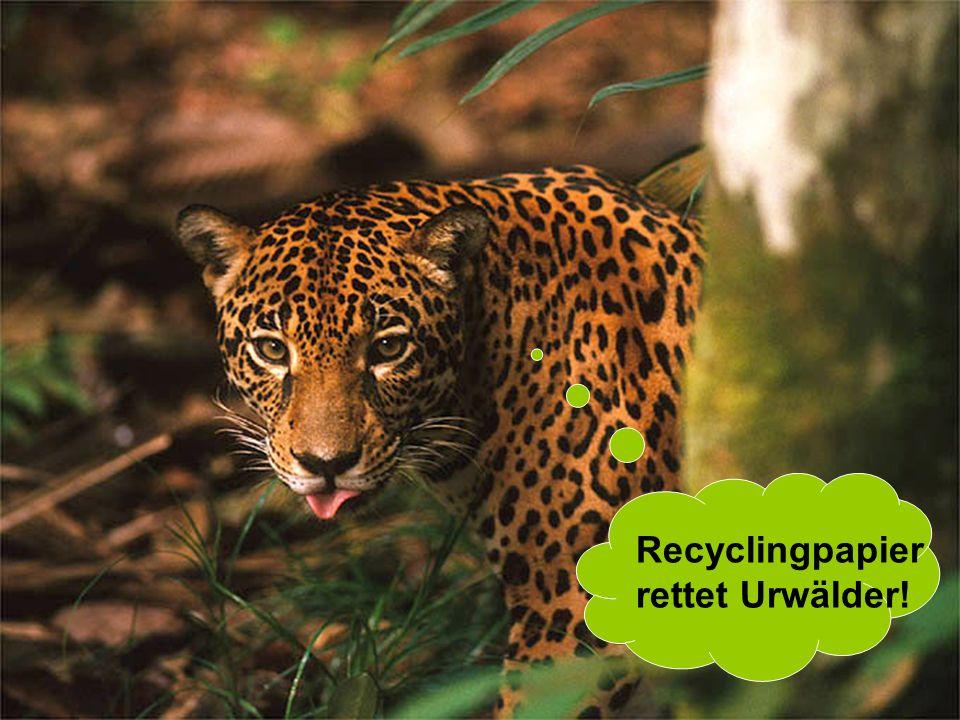 16 Recyclingpapier rettet Urwälder!