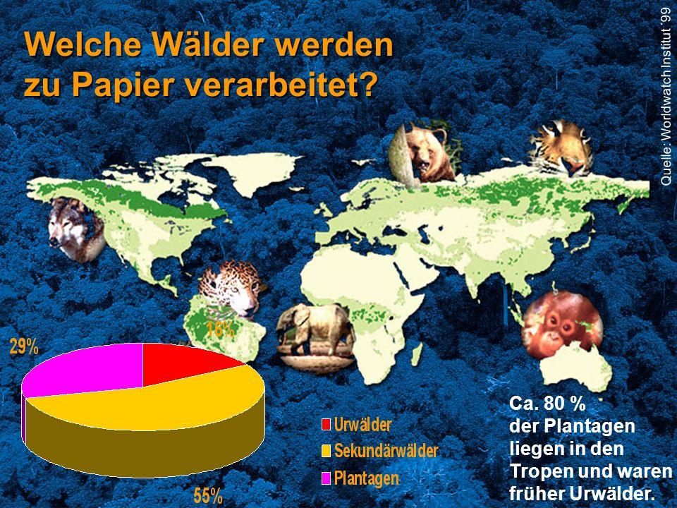 Quelle: Worldwatch Institute, '995 Quelle: Worldwatch Institut ´99 Welche Wälder werden zu Papier verarbeitet? Ca. 80 % der Plantagen liegen in den Tr
