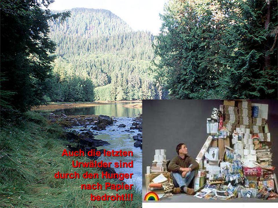 8 Auch die letzten Urwälder sind durch den Hunger nach Papier bedroht!!!