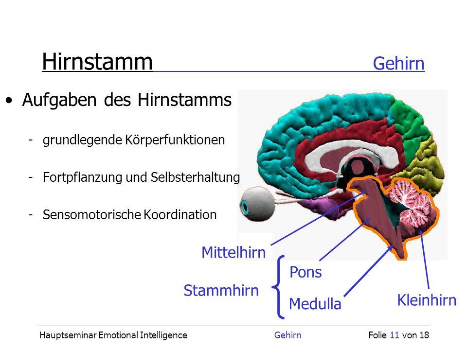 Hauptseminar Emotional Intelligence GehirnFolie 11 von 18 Hirnstamm Gehirn Aufgaben des Hirnstamms -grundlegende Körperfunktionen -Fortpflanzung und S