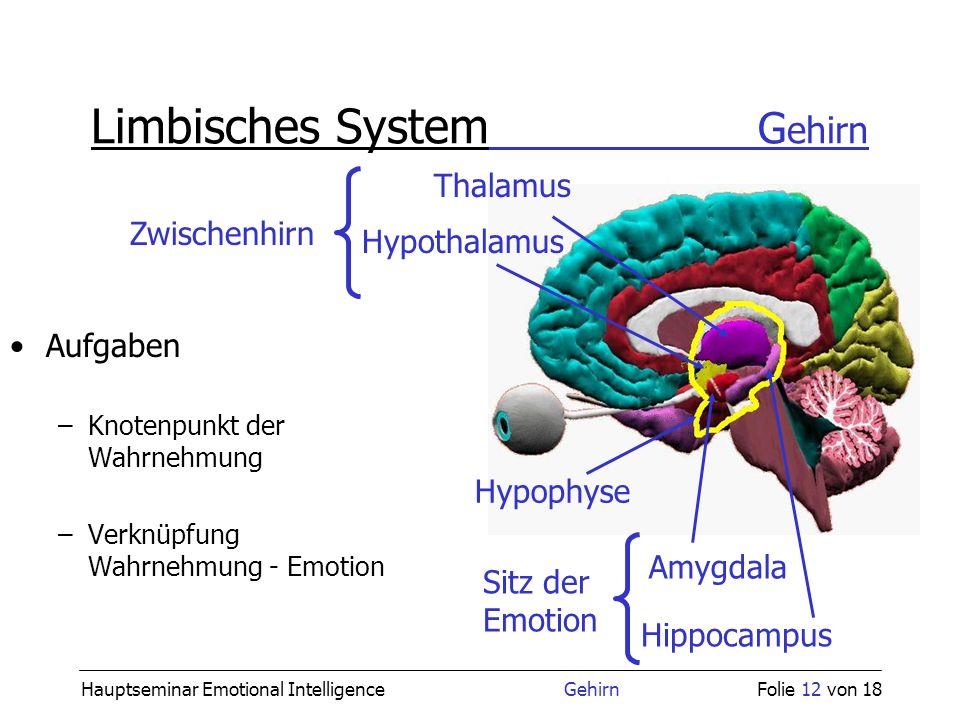 Hauptseminar Emotional Intelligence GehirnFolie 12 von 18 Limbisches System G ehirn Aufgaben –Knotenpunkt der Wahrnehmung –Verknüpfung Wahrnehmung - E
