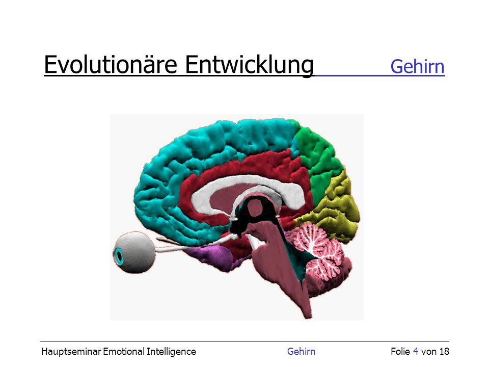 Hauptseminar Emotional Intelligence GehirnFolie 4 von 18 Evolutionäre Entwicklung Gehirn