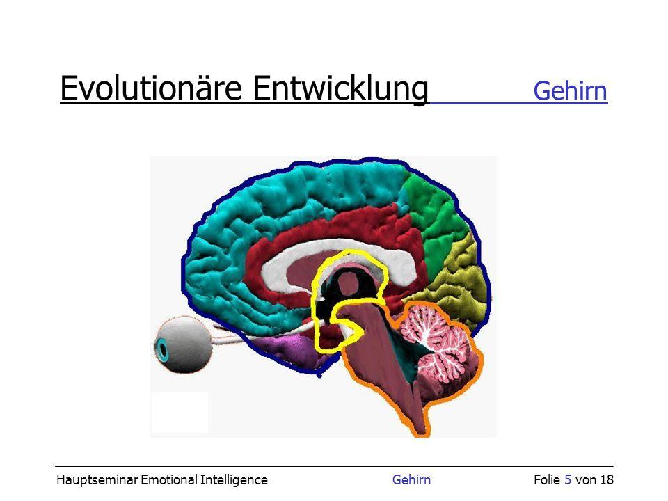 Hauptseminar Emotional Intelligence GehirnFolie 5 von 18 Evolutionäre Entwicklung Gehirn