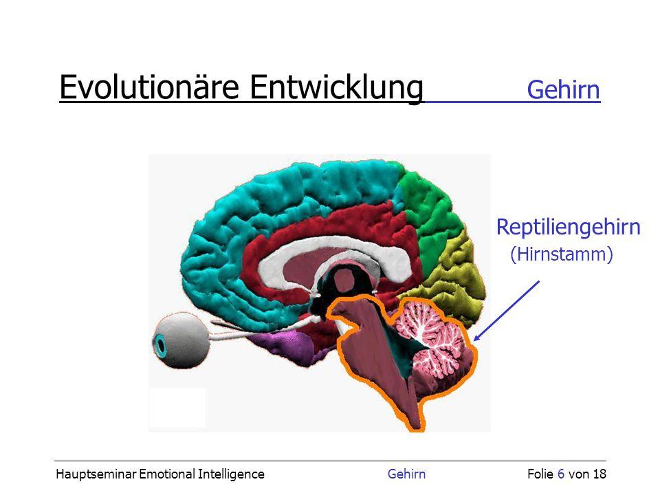 Hauptseminar Emotional Intelligence GehirnFolie 6 von 18 Evolutionäre Entwicklung Gehirn Reptiliengehirn (Hirnstamm)