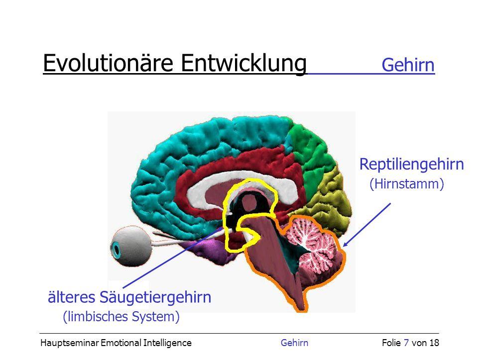 Hauptseminar Emotional Intelligence GehirnFolie 7 von 18 Evolutionäre Entwicklung Gehirn Reptiliengehirn (Hirnstamm) älteres Säugetiergehirn (limbisch