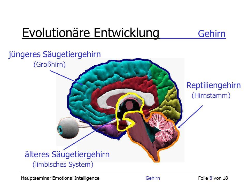 Hauptseminar Emotional Intelligence GehirnFolie 8 von 18 Evolutionäre Entwicklung Gehirn Reptiliengehirn (Hirnstamm) älteres Säugetiergehirn (limbisch