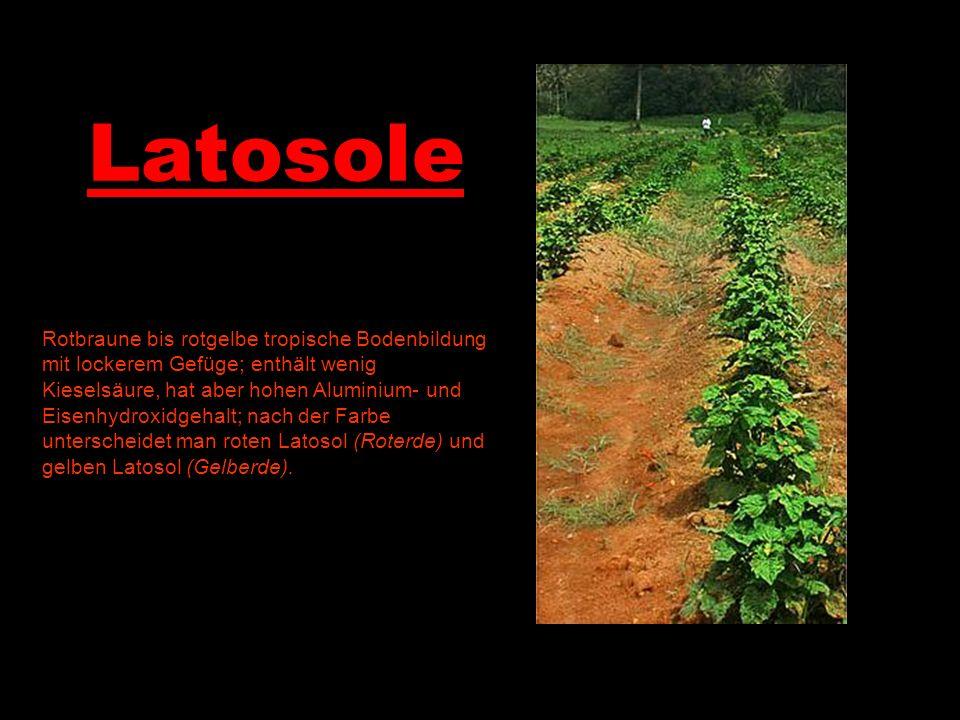 Latosole Rotbraune bis rotgelbe tropische Bodenbildung mit lockerem Gefüge; enthält wenig Kieselsäure, hat aber hohen Aluminium- und Eisenhydroxidgeha