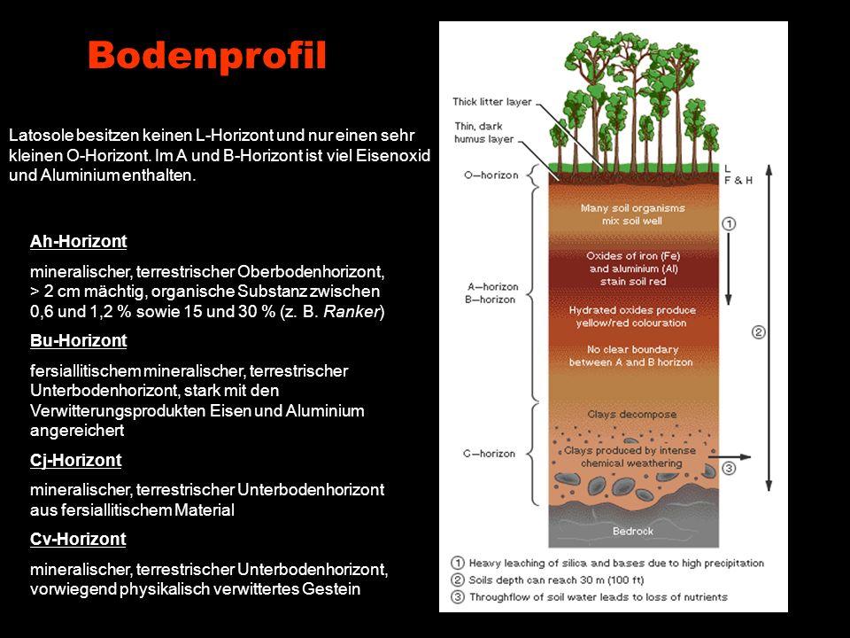 Bodenprofil Latosole besitzen keinen L-Horizont und nur einen sehr kleinen O-Horizont. Im A und B-Horizont ist viel Eisenoxid und Aluminium enthalten.