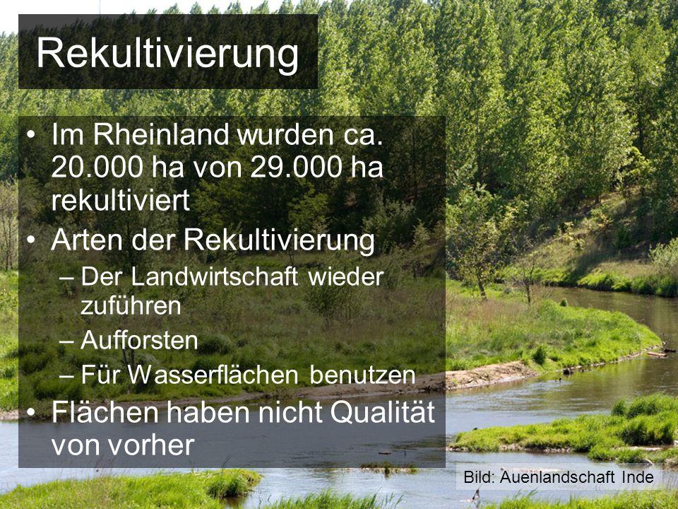 Rekultivierung Im Rheinland wurden ca. 20.000 ha von 29.000 ha rekultiviert Arten der Rekultivierung –Der Landwirtschaft wieder zuführen –Aufforsten –
