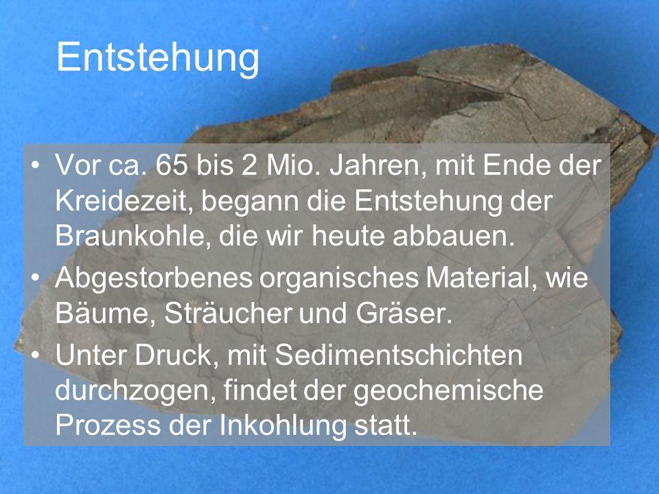 Entstehung Vor ca. 65 bis 2 Mio. Jahren, mit Ende der Kreidezeit, begann die Entstehung der Braunkohle, die wir heute abbauen. Abgestorbenes organisch