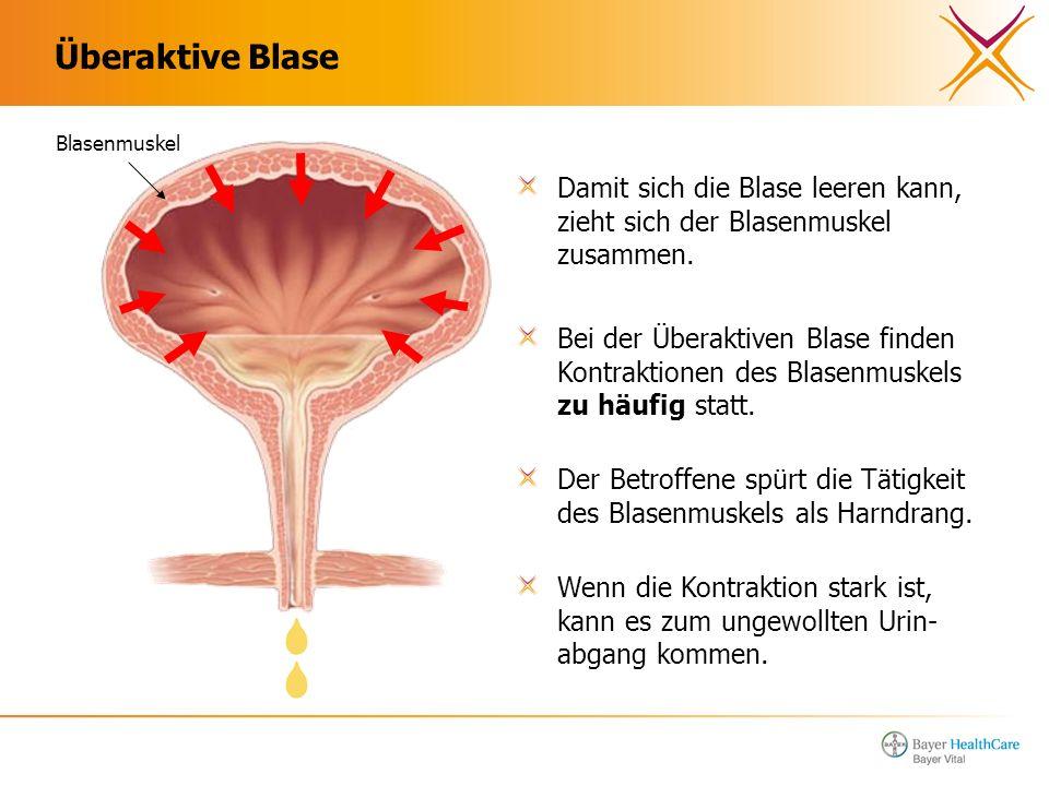 Überaktive Blase Damit sich die Blase leeren kann, zieht sich der Blasenmuskel zusammen. Blasenmuskel Bei der Überaktiven Blase finden Kontraktionen d