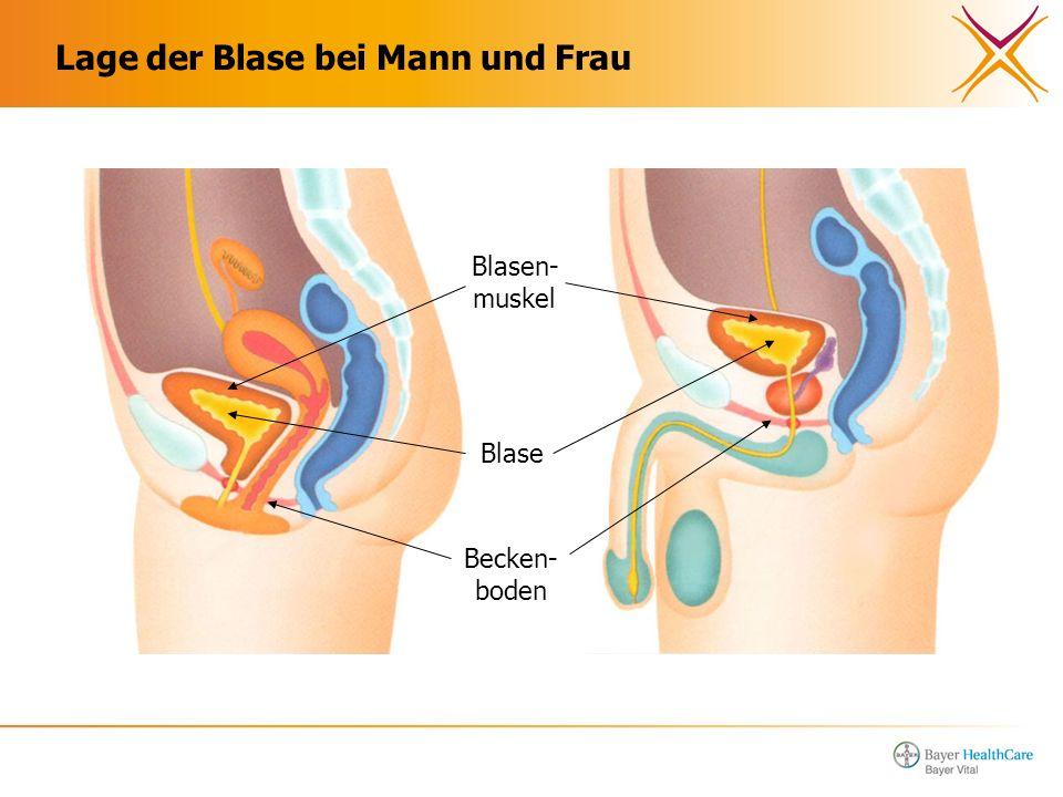 Lage der Blase bei Mann und Frau Blasen- muskel Blase Becken- boden