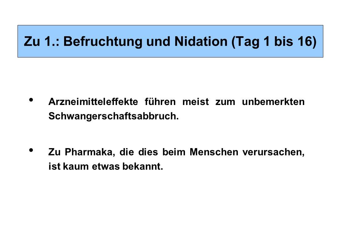 Zu 1.: Befruchtung und Nidation (Tag 1 bis 16) Arzneimitteleffekte führen meist zum unbemerkten Schwangerschaftsabbruch. Zu Pharmaka, die dies beim Me