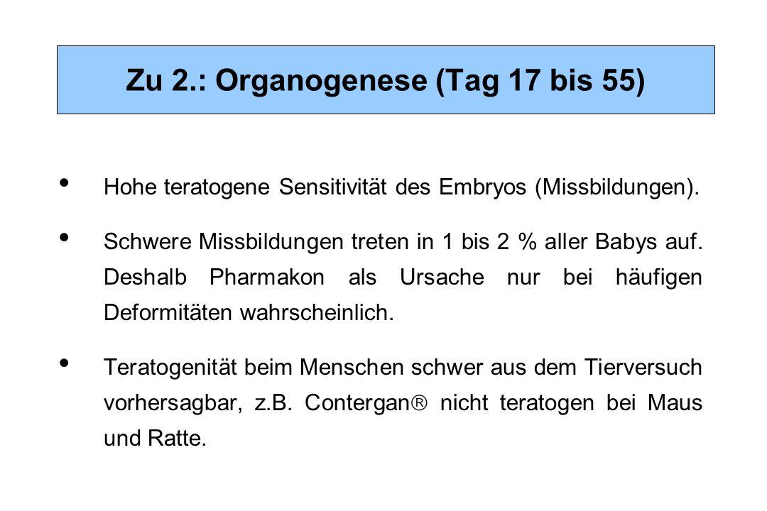 Zu 2.: Organogenese (Tag 17 bis 55) Hohe teratogene Sensitivität des Embryos (Missbildungen). Schwere Missbildungen treten in 1 bis 2 % aller Babys au