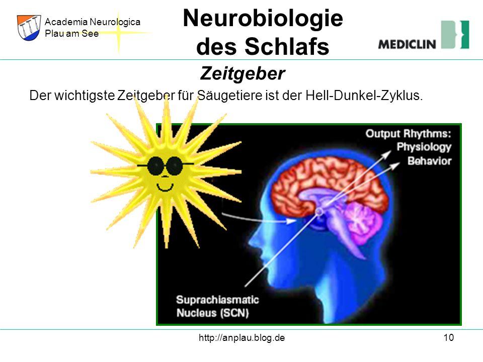 http://anplau.blog.de10 Der wichtigste Zeitgeber für Säugetiere ist der Hell-Dunkel-Zyklus. Academia Neurologica Plau am See Neurobiologie des Schlafs