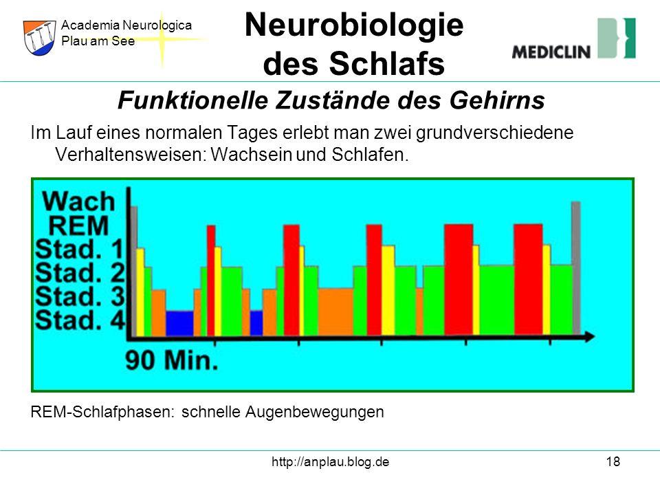 http://anplau.blog.de18 Im Lauf eines normalen Tages erlebt man zwei grundverschiedene Verhaltensweisen: Wachsein und Schlafen. Academia Neurologica P