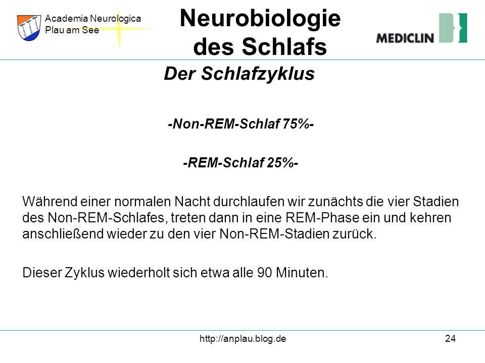 http://anplau.blog.de24 -Non-REM-Schlaf 75%- -REM-Schlaf 25%- Während einer normalen Nacht durchlaufen wir zunächts die vier Stadien des Non-REM-Schla
